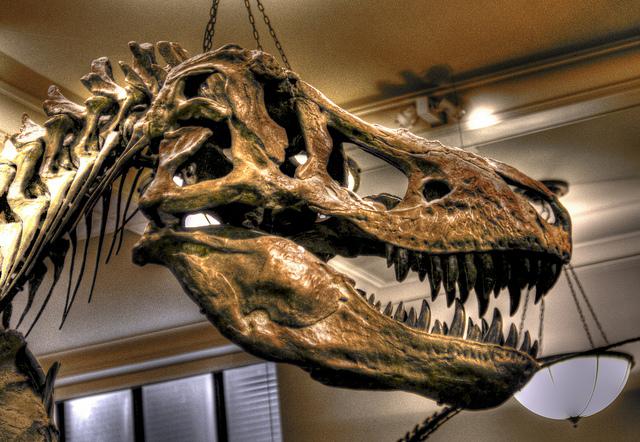 czaszka-dinozaura