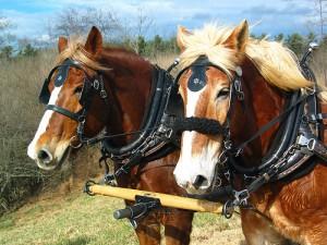konie-praca
